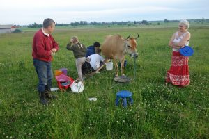 Mats, Eerika, and volunteers milking Bhumi.