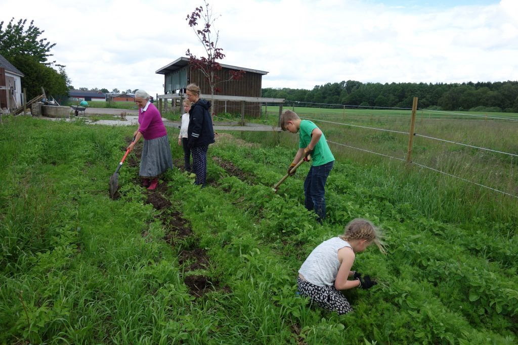 Weeding in the potato lands.