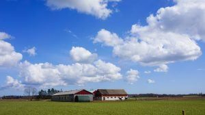 View of the barn, horses, and open blue skies.