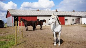 Three horses in the barn area.